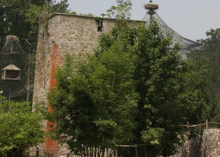 Tour Saint-Bernard - Pairi Daiza