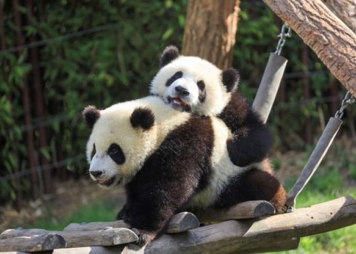 Bao Di et Bao Mei ensemble