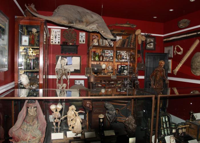 Cabinet des curiosités - Pairi Daiza