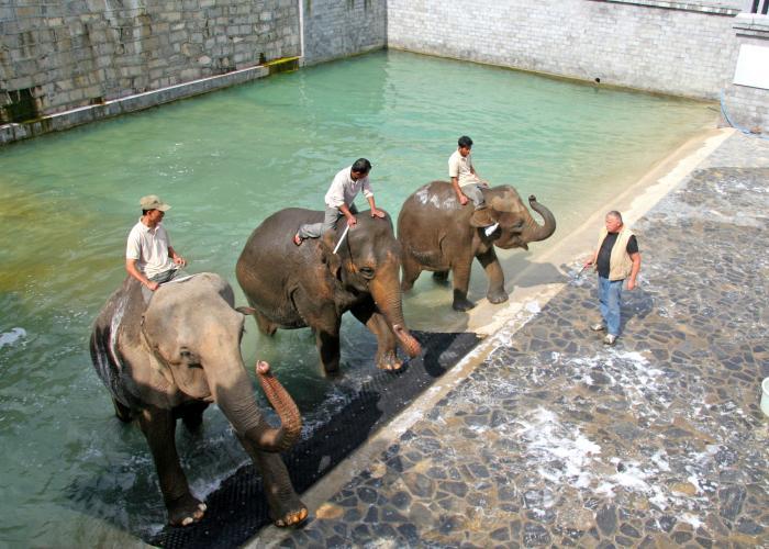 éléphant - Pairi Daiza